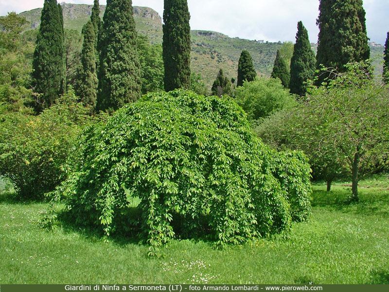 i giardini di ninfa a sermoneta (lt)