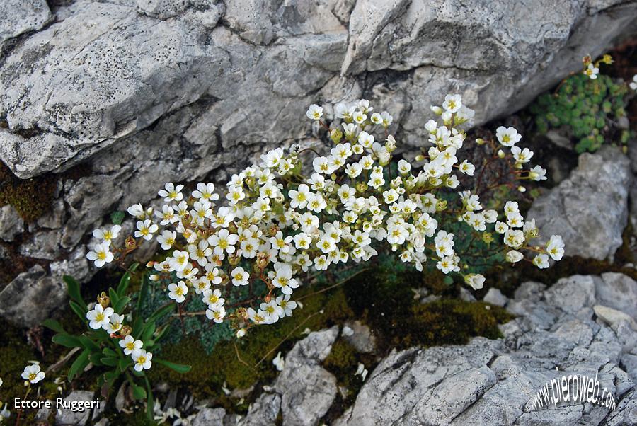 Escursione sul massiccio dello zuccone campelli 26 luglio for Fiori piccoli bianchi